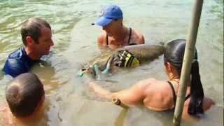 Extreme Fishing With Robson Green - Catfish Grabbling