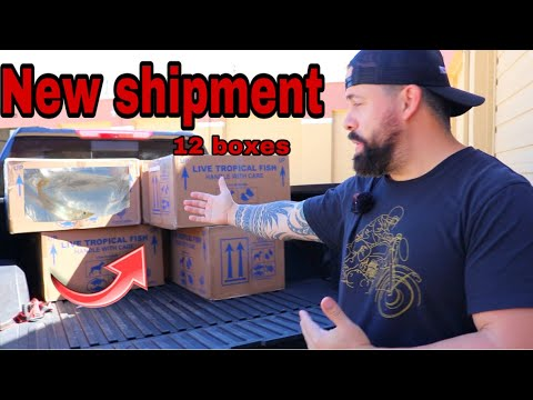 *UNBOXING* NEW TROPICAL FISH SHIPMENT FROM COLOMBIA Part 1