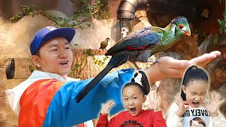 LoveStar Go to feed the animal zoo / Old macdonald had a farm / Nursery rhymes & kids songs