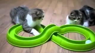 Кошки.Самые смешные проделки домашних пушистиков 2014