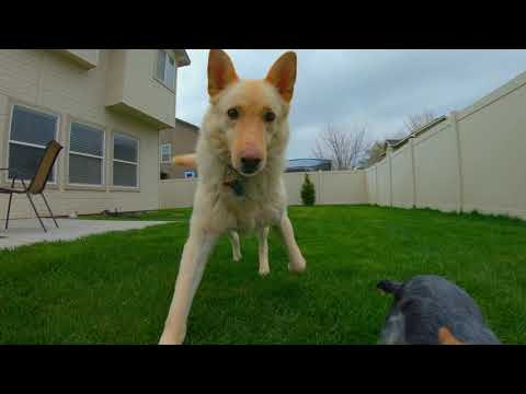 GoPro Hero 7 Black Footage Of cute and funny Dogs Amazing!