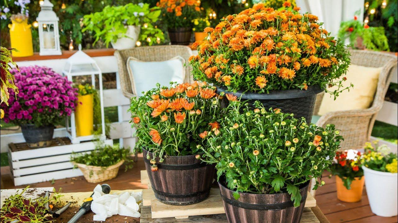 Ask Shirley Fall Garden Tips Home Family Youtube