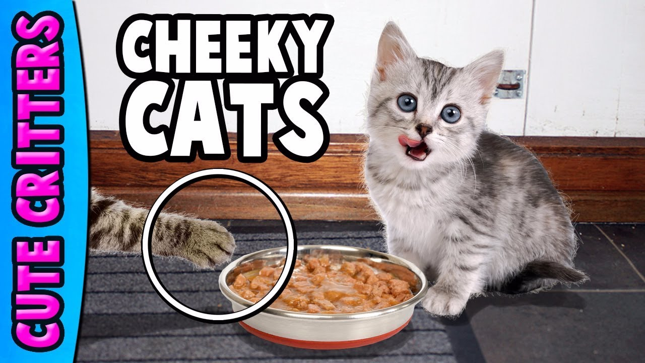 Cheeky Cats Compilation | Hilarious Cute Kittens – Funny Moments | Best New 2017 Collection