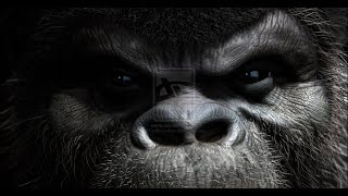 Sackcloth&Ashes THE 800 POUND GORILLA IN THE ROOM