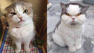 웃긴 화난 고양이  끝까지 지켜보세요! 이 애완 동물을…