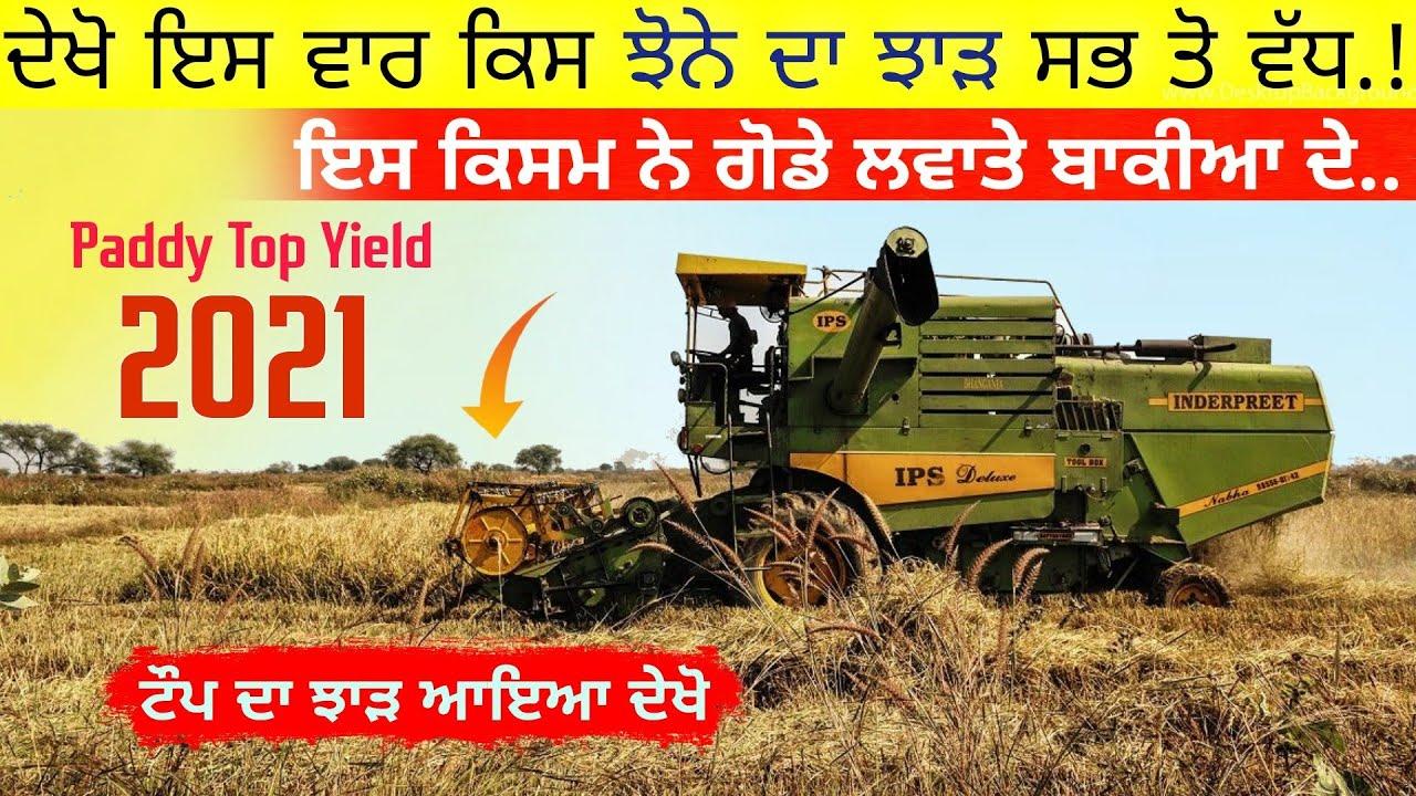Download ਝੋਨੇਆ ਦਾ ਝਾੜ ਦੇਖੋ • Paddy crop TOP yield in india    agri advice    Charanjit Singh Sangatpuria