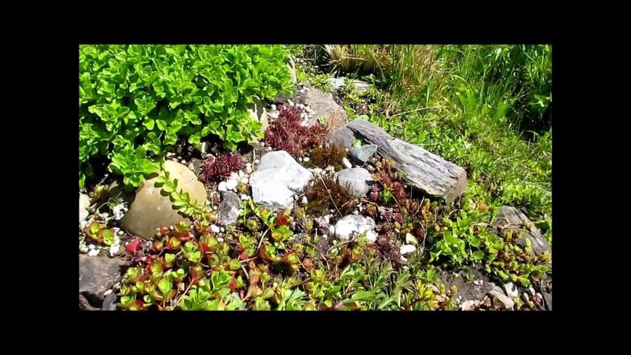 unser steingarten im mai 2012 live video von wolfgang schm kel youtube. Black Bedroom Furniture Sets. Home Design Ideas