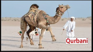 WHAT IS QURBANI ? IMPORTANT RULES AND GUIDELINES OF QURBANI, WHAT ANIMALS ARE SACRIFICED QURBANI ?