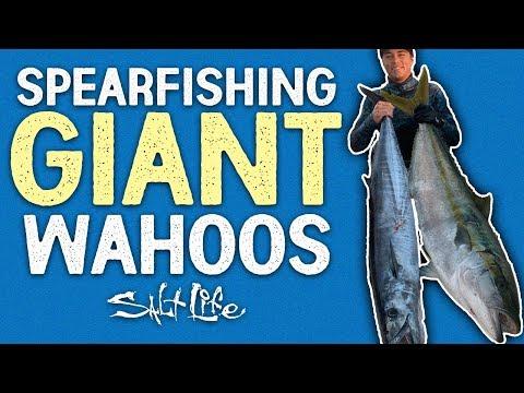 Spearfishing For Wahoo In Baja | Salt Life