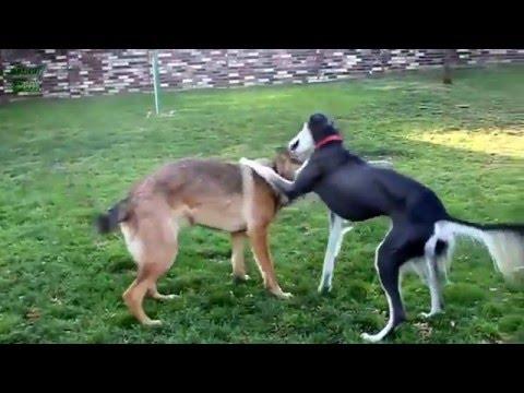 Животные видео приколы смотреть 3