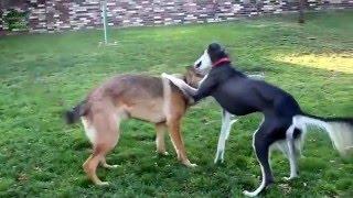 Прикольное видео о домашних животных!Смотреть всем!