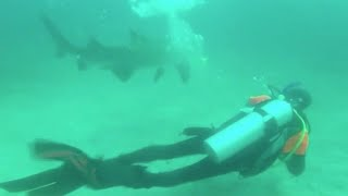 Diver frees shark from net