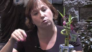 Garden & Plant Care : How to Transplant Lucky Bamboo