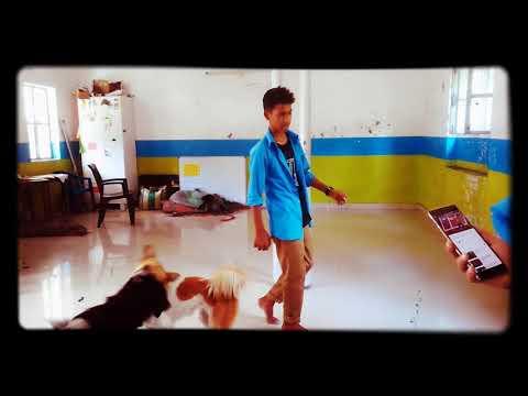 Sagar dances