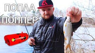СУПЕР СНАСТЬ ПОПЛА ПОППЕР Рыбалка на поплапоппер ловля белой рыбы на спиннинг