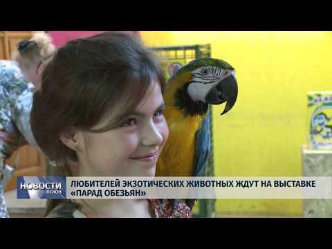 Новости Псков 23.07.2019 / Любителей экзотических животных ждут на выставке «Парад обезьян»