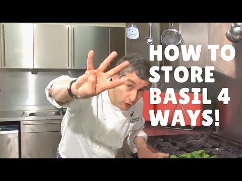 How To Store Basil Four Ways!