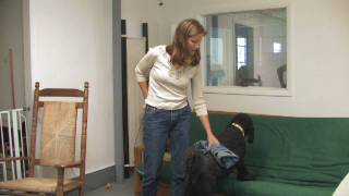 Dog Training : How To Scent Train Your Dog