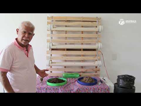 Engenheiro Agrônomo ensina como fazer uma horta vertical
