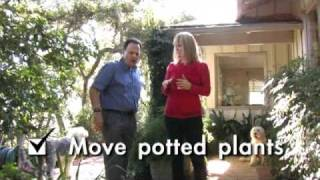 Home Wizards: Cindy Dole on Termites