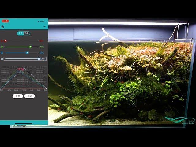 Đèn led thủy sinh Chihiros WRGB Điều chỉnh bằng Bluetooth - Phụ Kiện Thủy Sinh