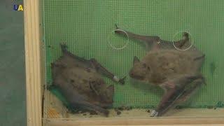 В харківському екопарку випустили на волю 2500 кажанів