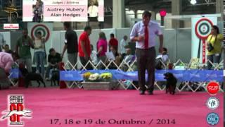 Especializada Staffordshire Bull Terrier   Machos   Audrey Hubery    Kcsp 2014