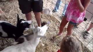 Elijah Feedin/Killing Goats