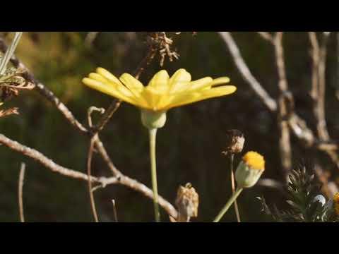 Free Download Ardhito Pramono - Bila Ost Susah Sinyal (unofficial Video) Mp3 dan Mp4