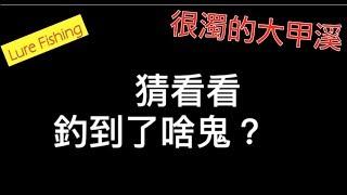 很濁很濁的大甲溪!捕獲新郵票(路亞/飛蠅/捲仔/何氏棘魞/鯰魚/Taiwan Masheer) (20190421)