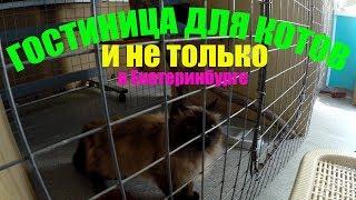 Гостиница для животных в Екатеринбурге | Гостиница для котов в Екатеринбурге | Екатеринбург