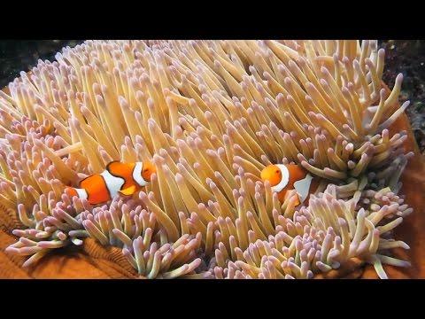 Reef 2050 Plan Investment Framework