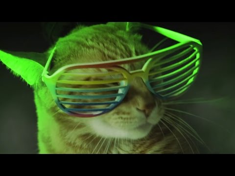 Meow Mix song [10 hours]
