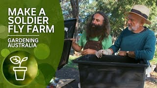How to make a black soldier fly farm