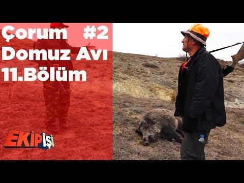 Çorum Domuz Avı 2 Ekip İşi 11.Bölüm Yaban Tv Wild Boar Hunting