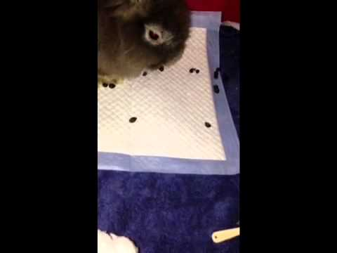 Lion head bunny, potty train - YouTube