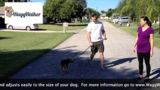Stop Your Dog From Pulling!  Waggwalker Harness.