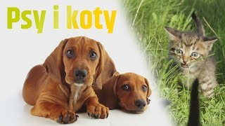 Obieżyświatki: Psy i koty - filmiki dla bardzo małych dzieci