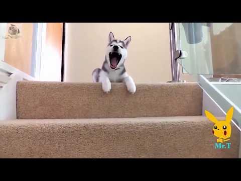 Funny dog vines compilation