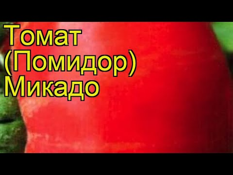 Томат обыкновенный Микадо. Краткий обзор, описание характеристик, где купить семена Micado