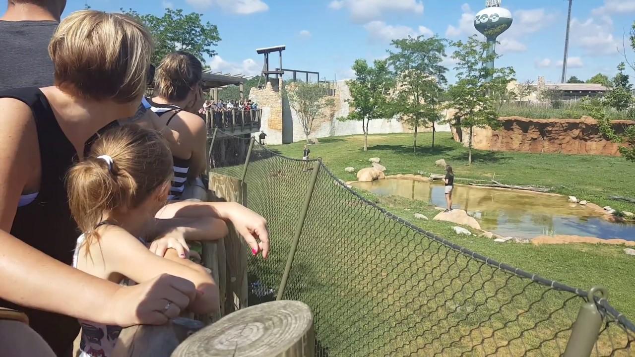 Download Columbus Zoo 2017 Cheetah Run