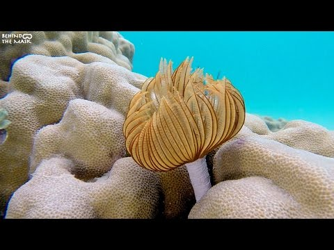 Feather duster worm with Go Pro (Dahab - South Sinai - Egypt)