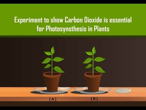 Carbon Dioxide is necessary for Photosynthesis in Plants with Simple Experiment