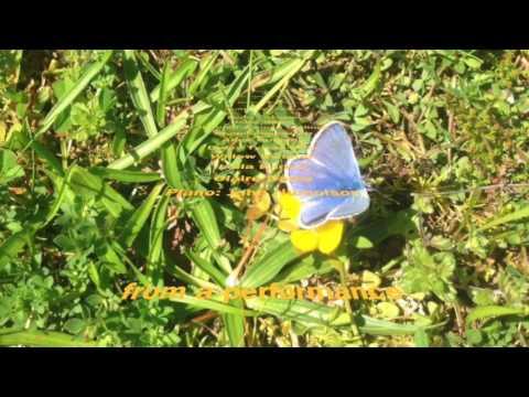 Fauré:  Le papillon et la fleur