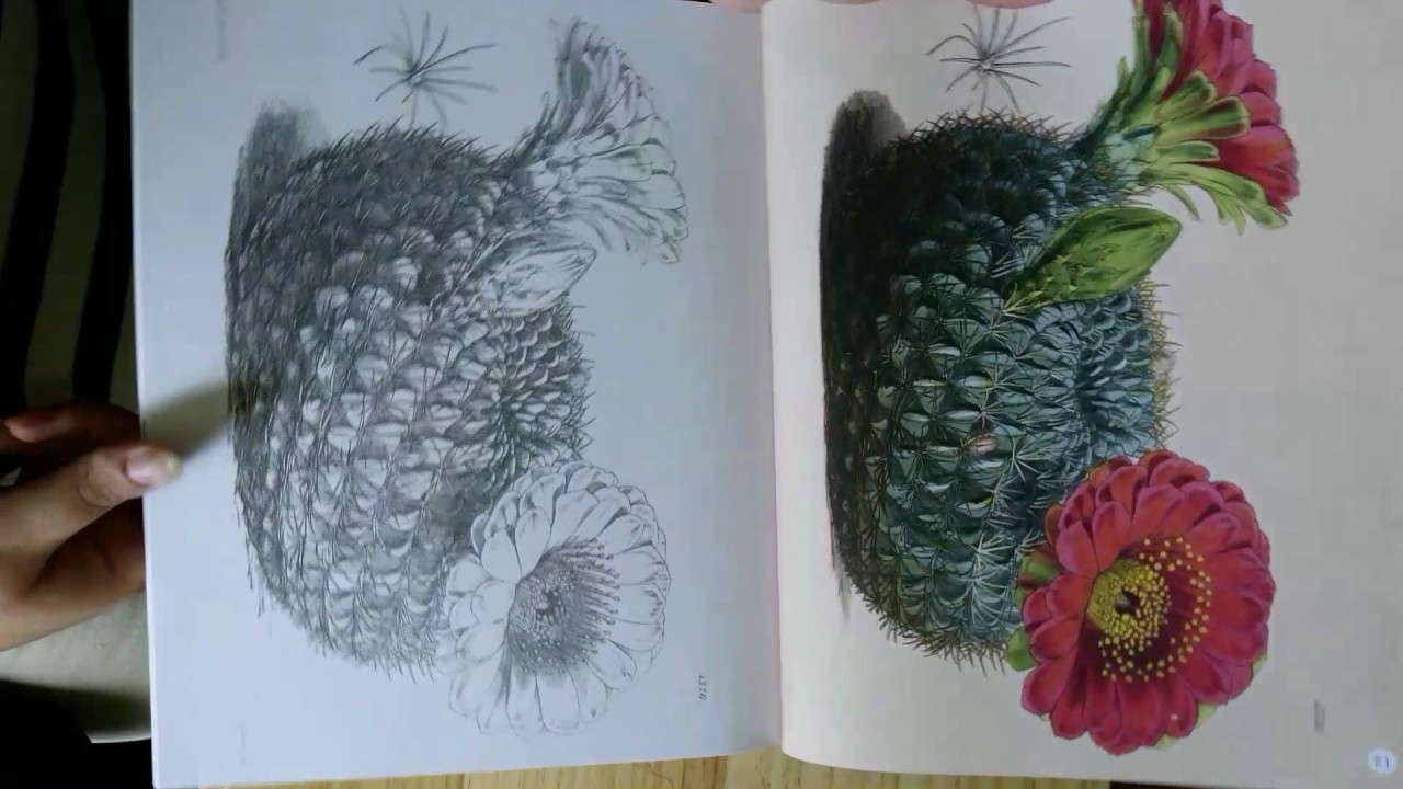 The kew gardens beautiful flowers colouring book youtube the kew gardens beautiful flowers colouring book mightylinksfo