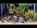 AWESOME Zebra Stone Aquascape