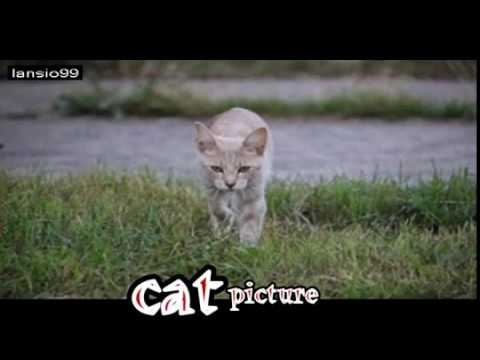 videos cats - TRY NOT TO LAUGH - Funny CATS Guaranteed To Make You Laugh || Funny Cat Compilation