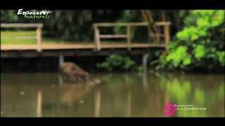 Parc national Guadeloupe - Espaces naturels 01 - Présentation du parc national