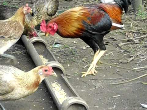 alexander farm breeding sweat gilmore