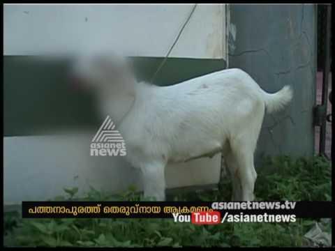 Stray dog attacked goat at Pathanapuram